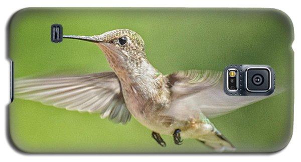 Untitled Hum_bird_three Galaxy S5 Case