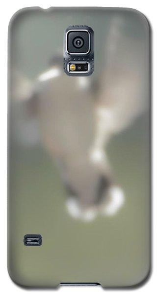 Untitled Hummingbird Galaxy S5 Case