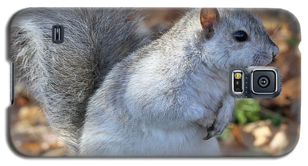 Galaxy S5 Case featuring the photograph Unusual White And Gray Squirrel by Doris Potter