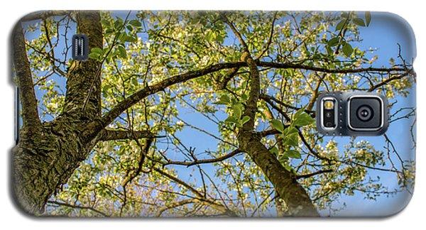 Up A Tree Galaxy S5 Case