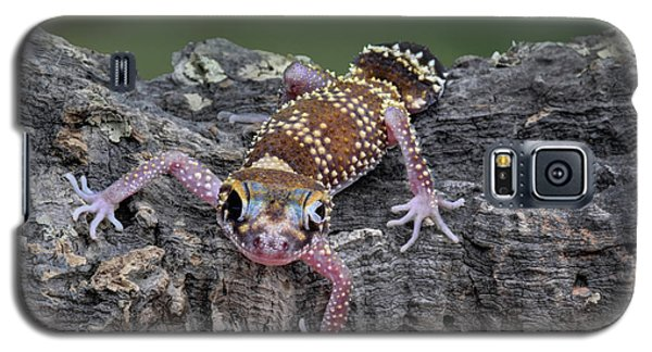 Galaxy S5 Case featuring the photograph Up And Over - Gecko by Nikolyn McDonald
