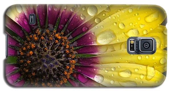 Daisy Up Close  Galaxy S5 Case