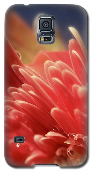 Up Tangerine Galaxy S5 Case