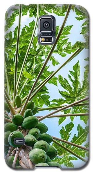 Up The Papaya Galaxy S5 Case