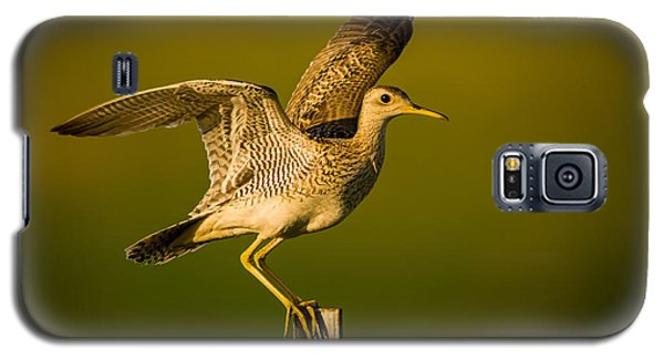 Upland Sandpiper On Steel Post Galaxy S5 Case