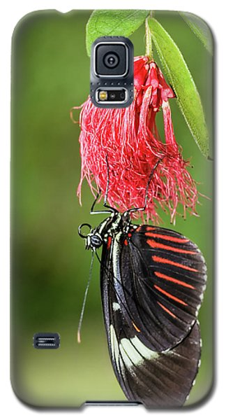 Upon A Red Blossom Galaxy S5 Case