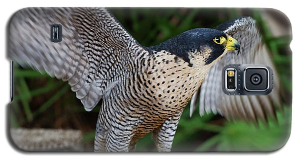 Galaxy S5 Case featuring the photograph Upset Peregrine by Arthur Dodd