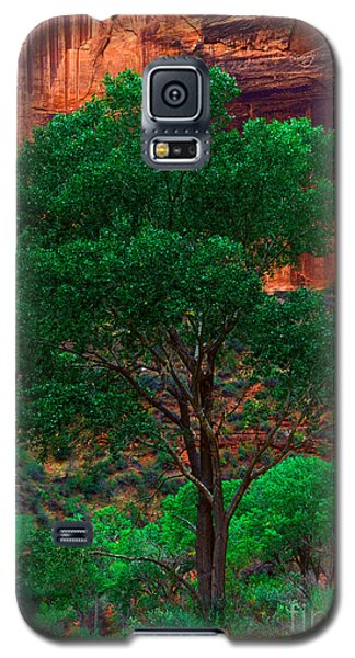 Utah - Cottonwood Galaxy S5 Case