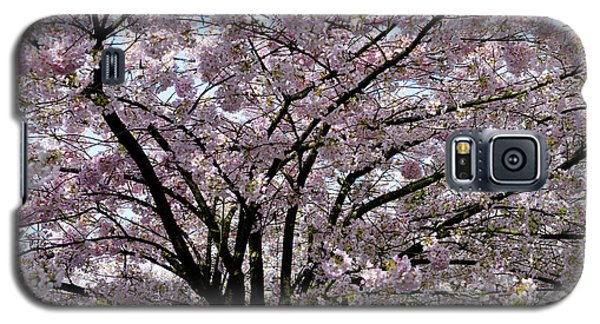 Galaxy S5 Case featuring the photograph Vancouver 2017 Spring Time Cherry Blossoms - 10 by Terry Elniski