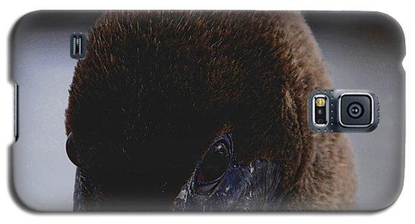 Velvet Brown Pelican Galaxy S5 Case