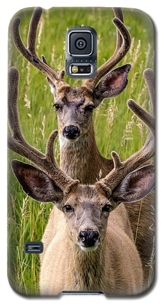 Velvet Bucks Galaxy S5 Case