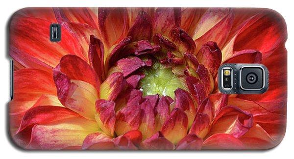 Variegated Dahlia Beauty Galaxy S5 Case