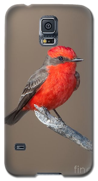 Vermilion Flycatcher Galaxy S5 Case