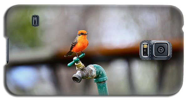 Vermilion Flycatcher Two Galaxy S5 Case