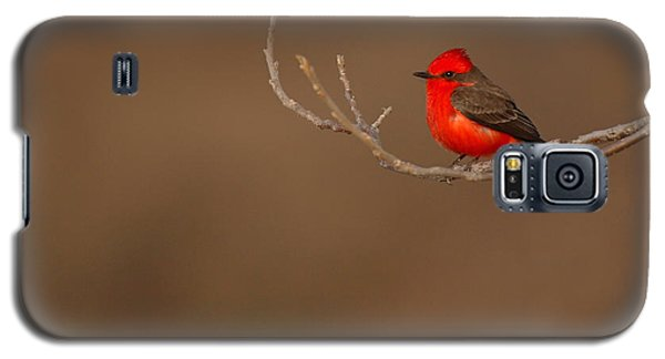 Vermillion Flycatcher On Early Spring Perch Galaxy S5 Case by Max Allen