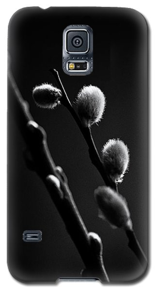 Vernal Awakening Galaxy S5 Case by Susan Capuano