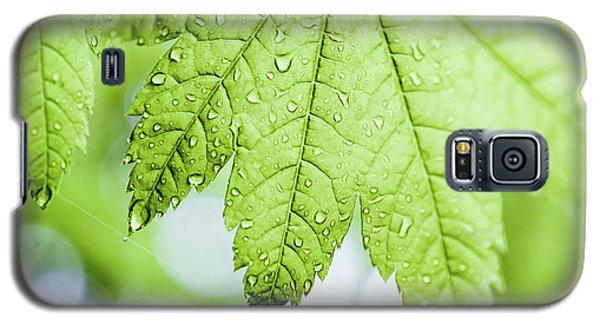 Vert Galaxy S5 Case