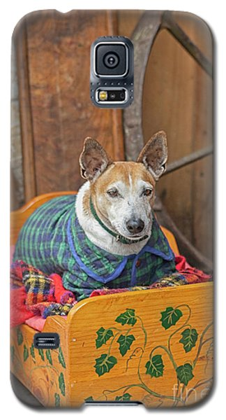 Galaxy S5 Case featuring the photograph Very Old Pet Dog In Clothes On Own Bed by Patricia Hofmeester