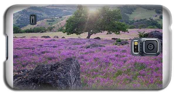 Very Fetching Vetchling - Sweet Peas In Spring Galaxy S5 Case by Brooks Garten Hauschild