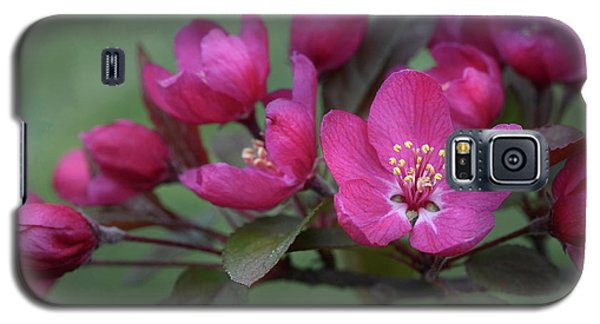 Galaxy S5 Case featuring the photograph Vibrant Blooms by Ann Bridges
