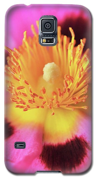 Galaxy S5 Case featuring the photograph Vibrant Cistus Heart. by Terence Davis