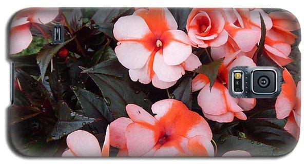 Plumerias Vibrant Pink Flowers Galaxy S5 Case