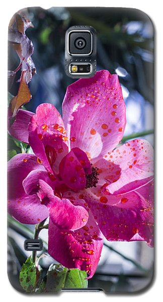 Vibrant Pink Rose Galaxy S5 Case