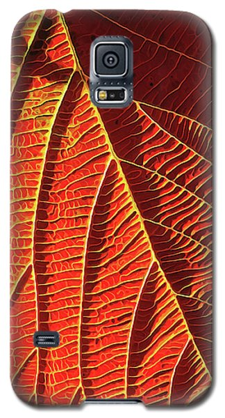 Vibrant Viburnum Galaxy S5 Case by ABeautifulSky Photography