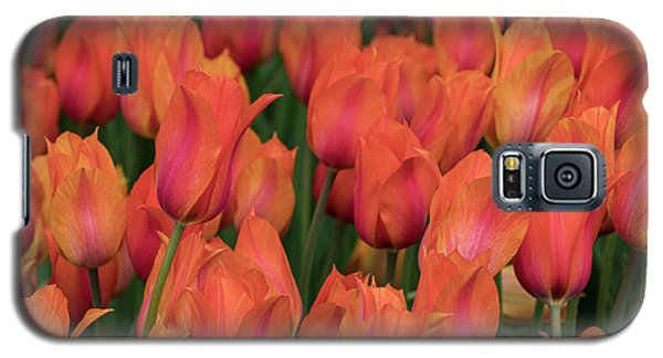 Vibrant Whispers Galaxy S5 Case