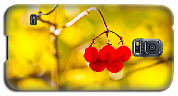Galaxy S5 Case featuring the photograph Viburnum Berries - Natural Olympic Emblem by Alexander Senin