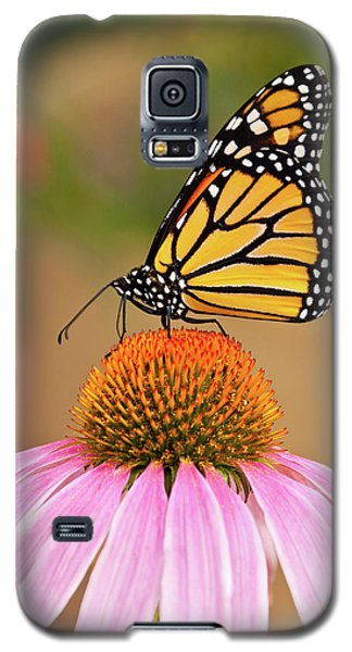 Galaxy S5 Case featuring the photograph Monarch Butterfly On A Purple Coneflower by Jeff Goulden