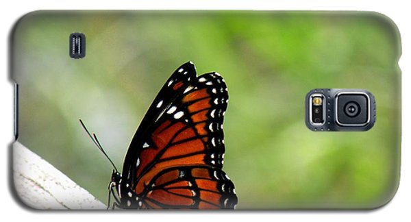 Galaxy S5 Case featuring the photograph Viceroy Butterfly Side View by Rosalie Scanlon