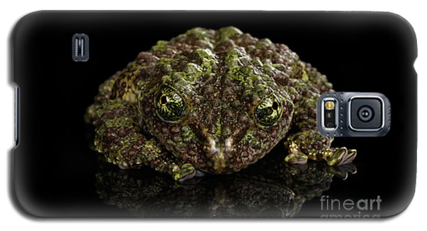 Vietnamese Mossy Frog, Theloderma Corticale Or Tonkin Bug-eyed Frog, Isolated On Black Background Galaxy S5 Case