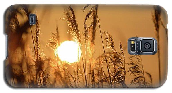 View Of Sun Setting Behind Long Grass B Galaxy S5 Case
