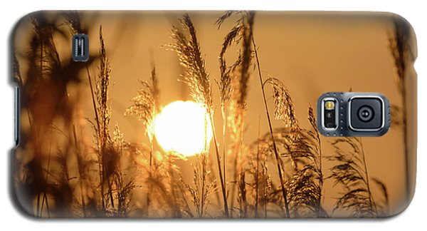 View Of Sun Setting Behind Long Grass B Galaxy S5 Case