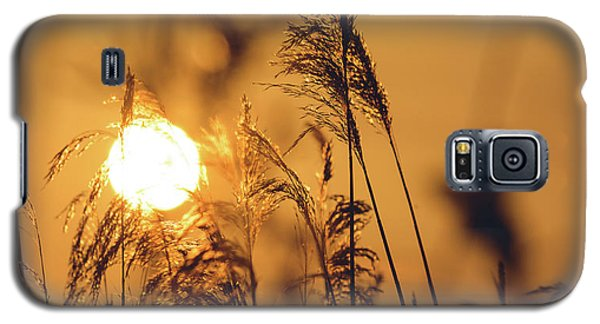 View Of Sun Setting Behind Long Grass C Galaxy S5 Case