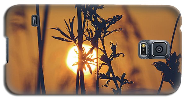 View Of Sun Setting Behind Long Grass D Galaxy S5 Case