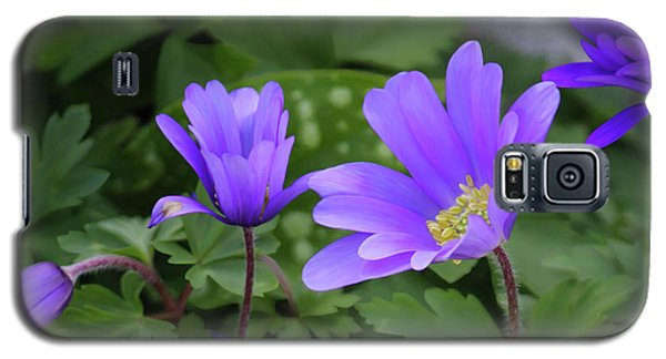 Vinca In The Morning Galaxy S5 Case