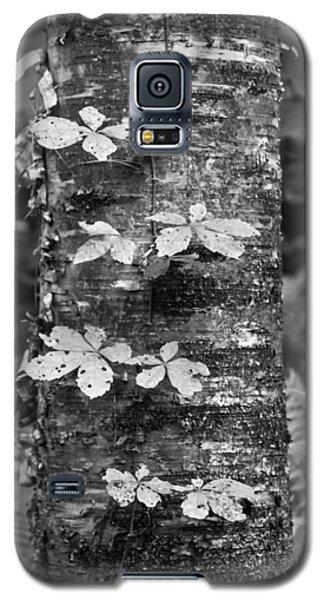 Vine Galaxy S5 Case