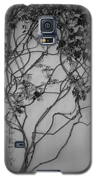 Galaxy S5 Case featuring the photograph Vine by Jacqui Boonstra