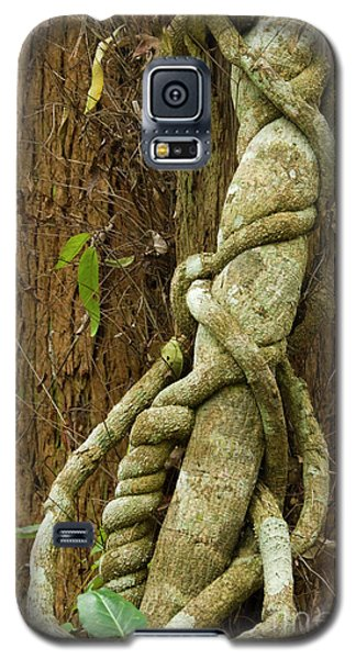 Galaxy S5 Case featuring the photograph Vine by Werner Padarin