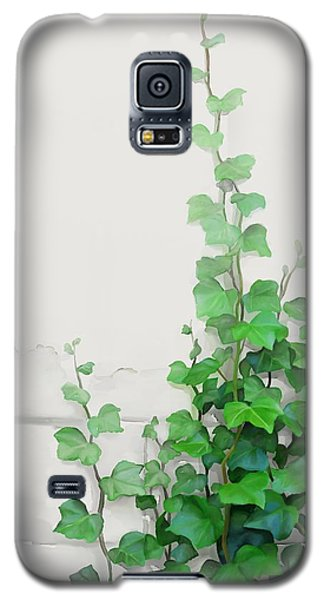Vines By The Wall Galaxy S5 Case