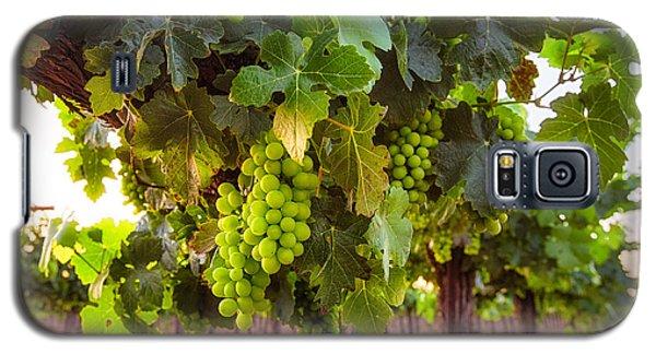 Vineyard 3 Galaxy S5 Case