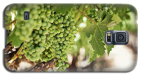 Galaxy S5 Case featuring the photograph Wine Vineyard Of St. Helena - Grapevine Napa Valley Photography by Melanie Alexandra Price