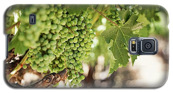 Wine Vineyard Of St. Helena - Grapevine Napa Valley Photography Galaxy S5 Case