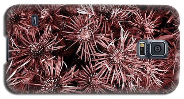 Vintage Asters Galaxy S5 Case by Danielle R T Haney