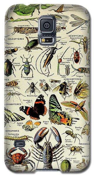 Vintage Illustration Of Various Invertebrates Galaxy S5 Case