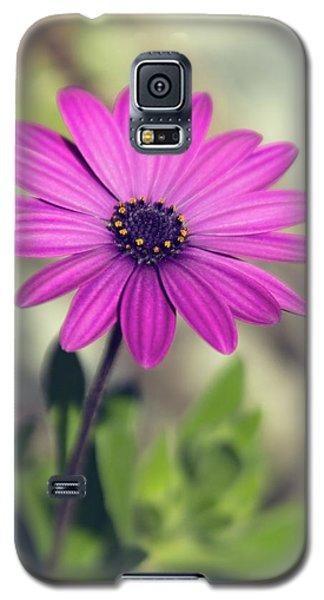 Galaxy S5 Case featuring the photograph Vintage Purple Daisy  by Saija Lehtonen