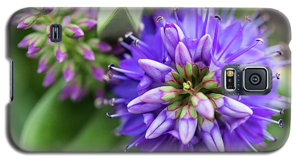 Violet Burst Galaxy S5 Case