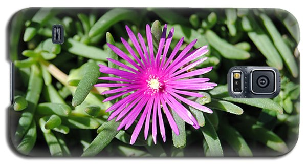 Ice Plant Galaxy S5 Case